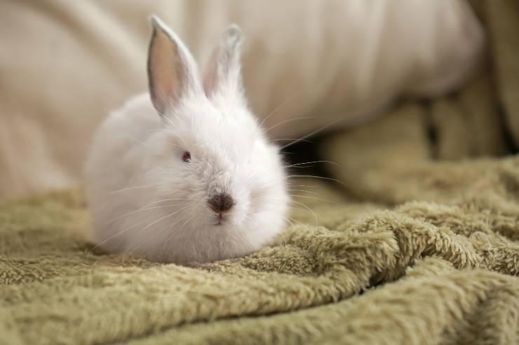 coniglio sul letto