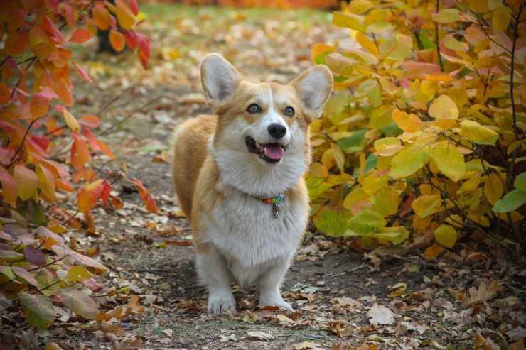 cucciolo sorridente