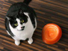 cosa possiamo dare al gatto quando finisce il suo cibo