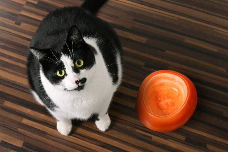cosa dare al gatto quando finisce il suo cibo