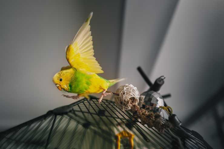cosa fare quando il pappagallo scappa