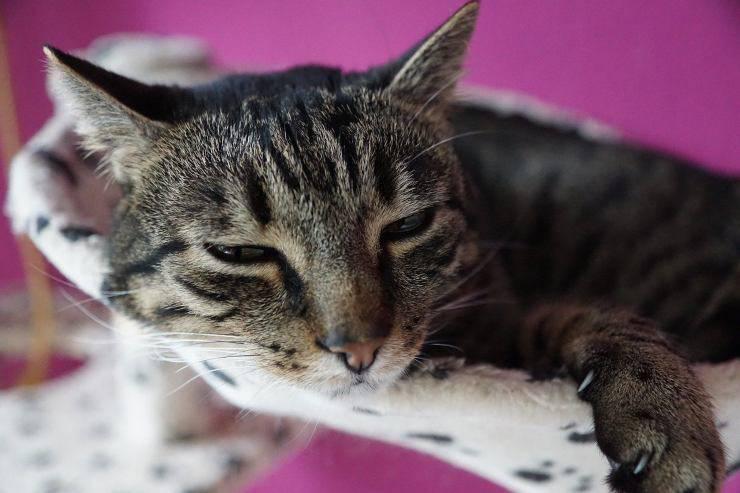 Micio stanco