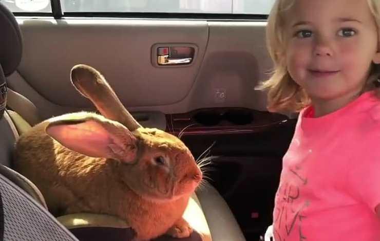 Il coniglio e la padroncina (Foto Instagram)