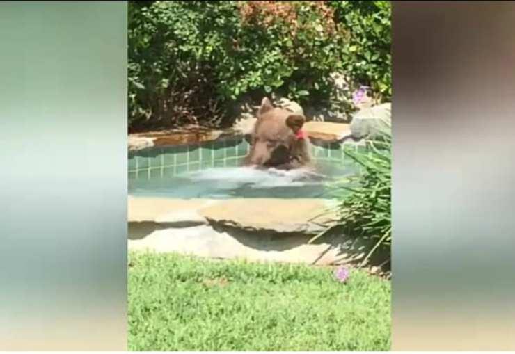 Il ritrovamento dell'orso (Foto video)