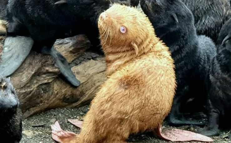 Lo sguardo curioso della foca (Foto Instagram)