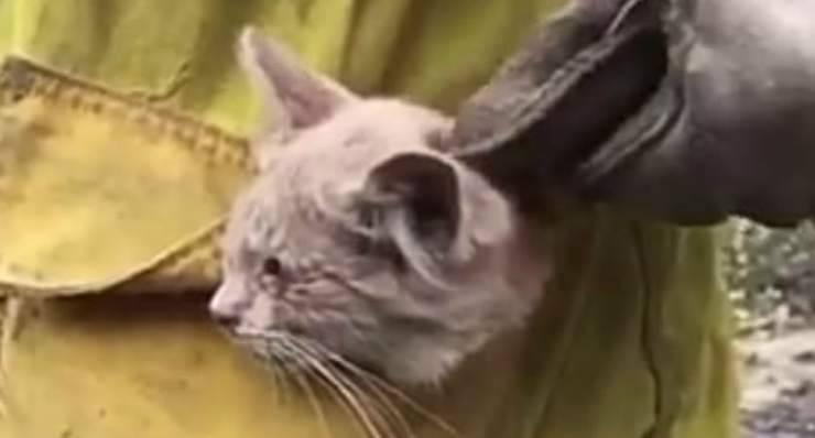 Gatto triste (Foto video)