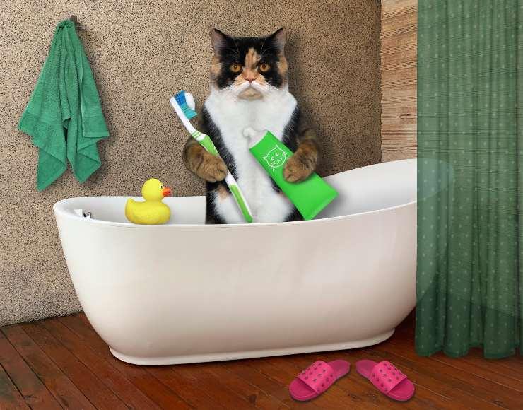 dentifricio per gatti fai da te
