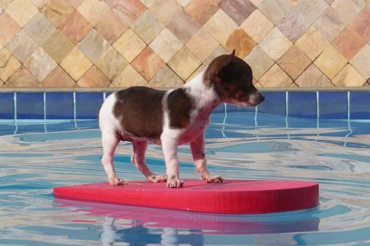 cucciolo piscina