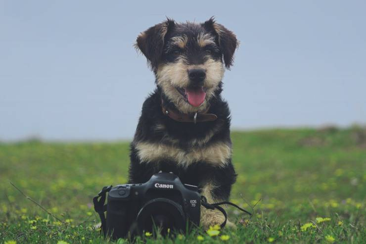 fotografare cucciolo cane