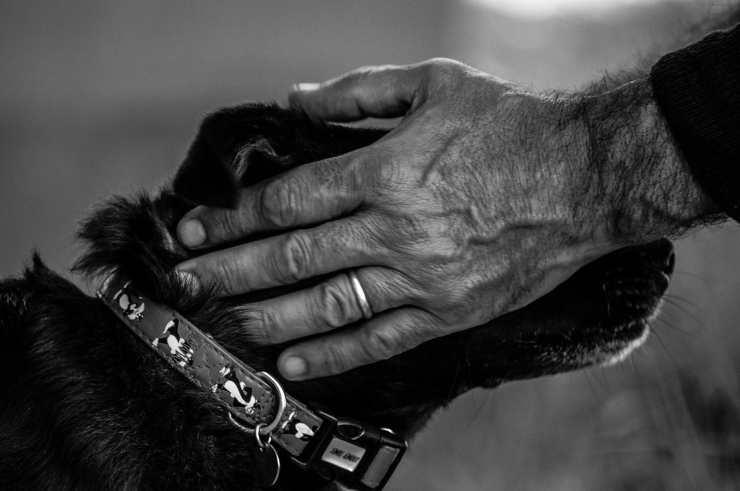 Una carezza al cane (Foto Pixabay)