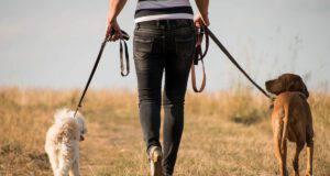 cani passeggiata