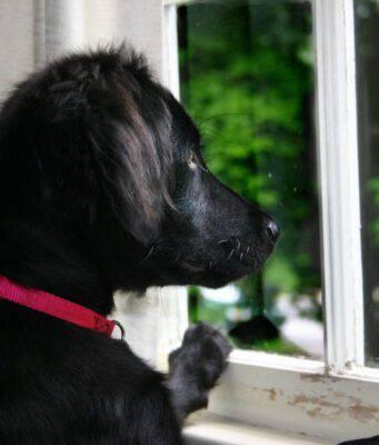 cane finestra solo casa