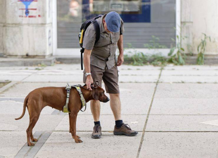cane guinzaglio passeggiata