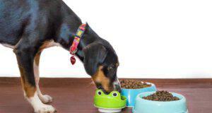 Il cane mangia le crocchette (Foto Pixabay)
