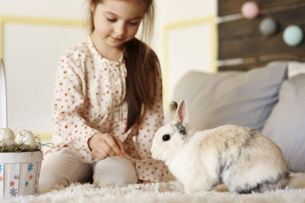 Dormire con il coniglio nel letto, si può fare o è pericoloso?