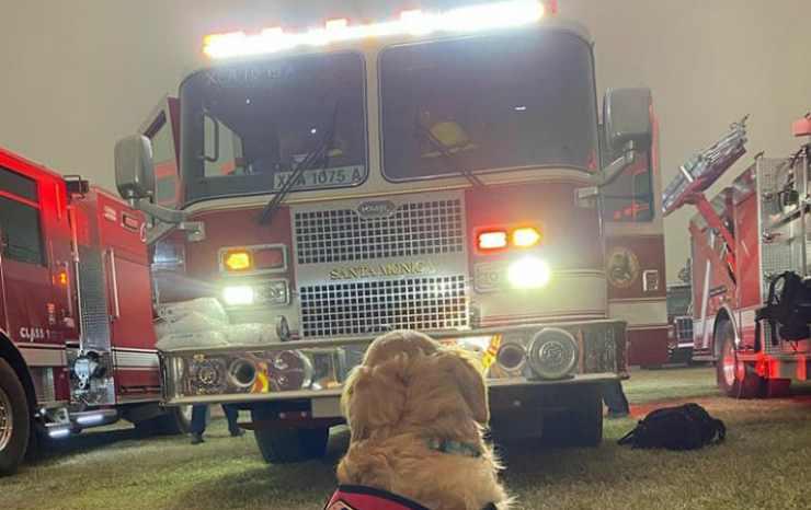 Il cane che osserva il camion dei Vigili (Foto Instagram)