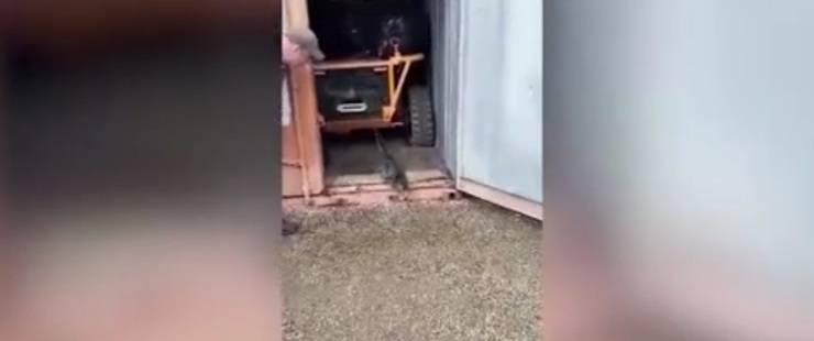 Gatto intrappolato nel container