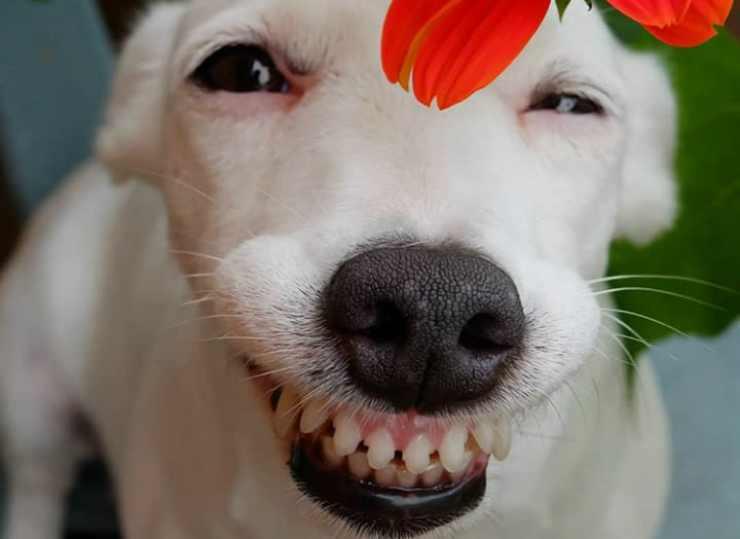 Il cane espressivo (Foto Instagram)