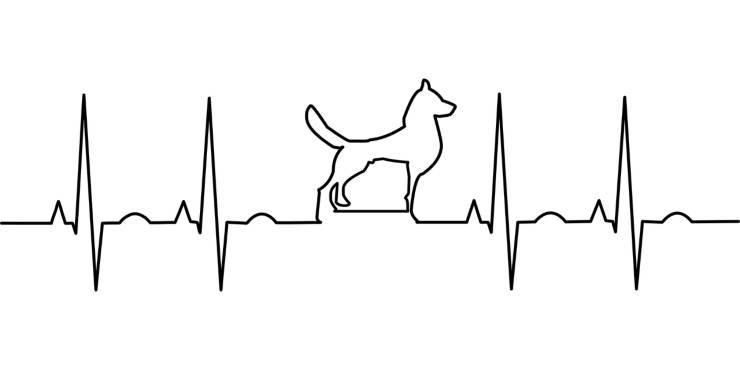 Elettrocardiogramma con cane