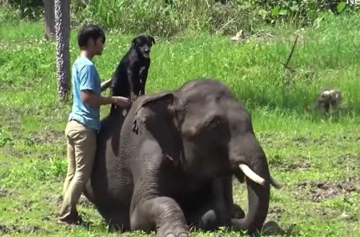 elefante valentine cani