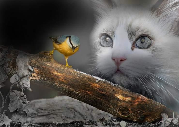 Gatto fissa un uccellino