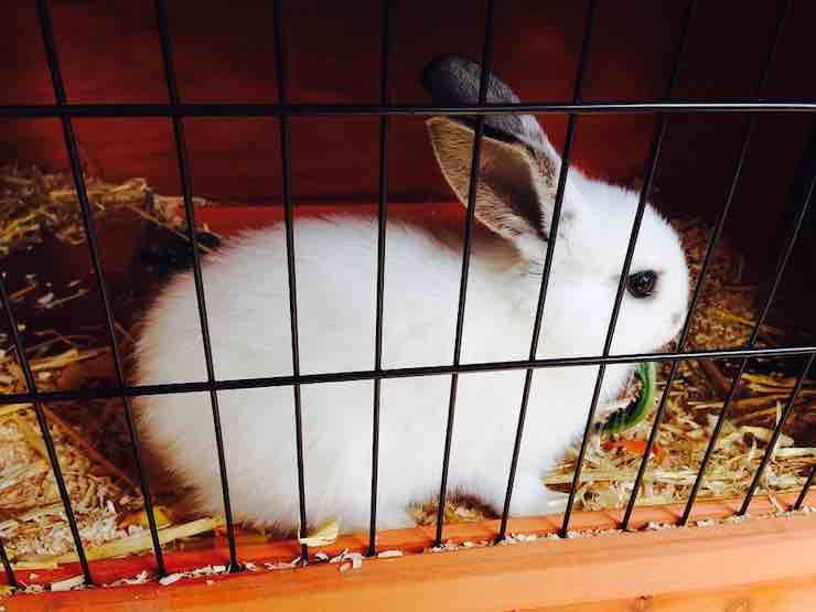 gabbia coniglio