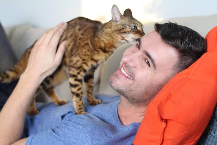gatto annusa naso del padrone