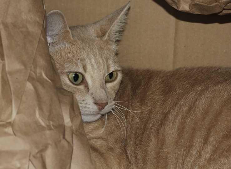 Perché i gatti amano la carta e la plastica