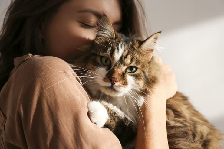 Metodi contraccettivi per il gatto (Foto Adobe Stock)