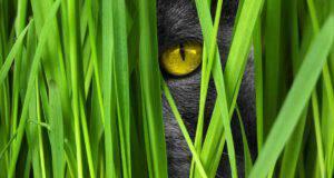 gatto invisibile quiz