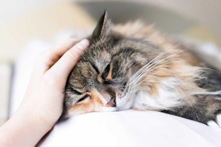 gatto malato