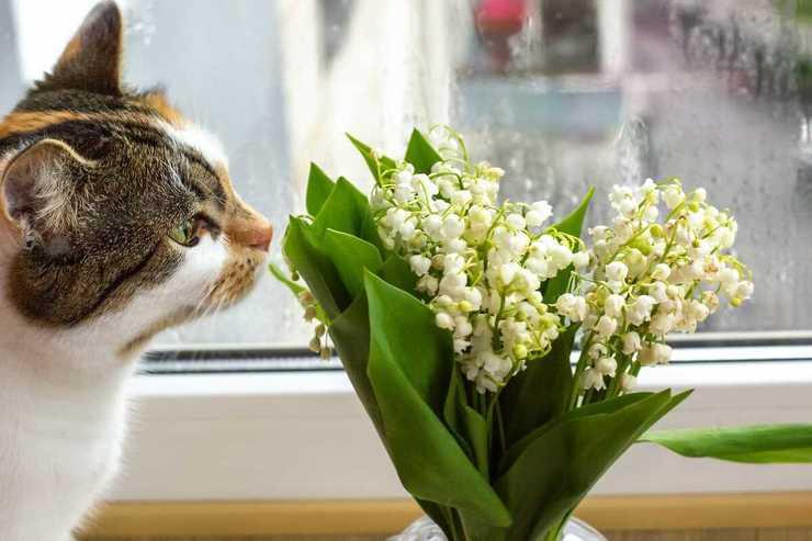 Piante velenose per il gatto (Foto Adobe Stock)