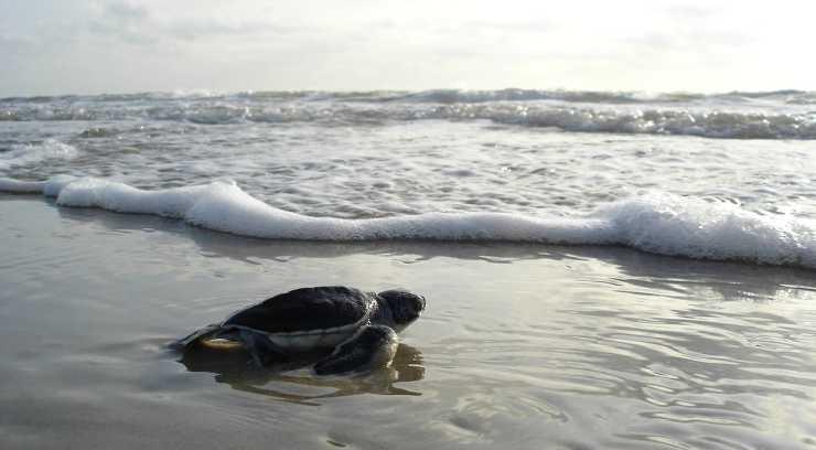Tartaruga sulla spiaggia (Foto Pixabay)