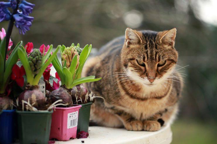 piante sostanze pericolose gatto