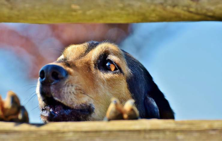 Il cane in allerta (Foto Pixabay)