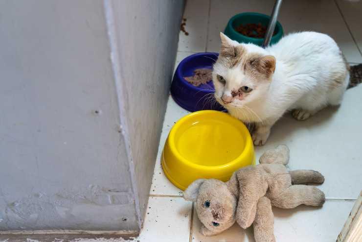 Il gatto butta i giocattoli nella ciotola dell'acqua