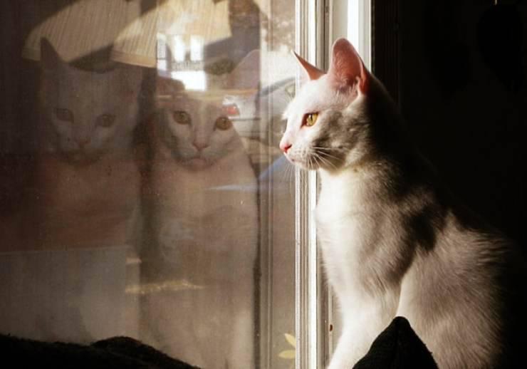 il gatto soffre a stare sempre in casa