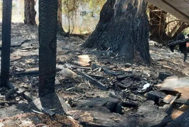 incendio colonia felina resti