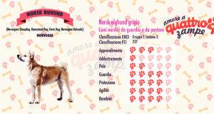 Norsk Buhund scheda razza
