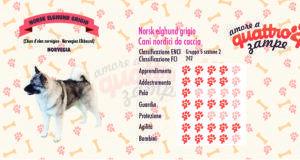 Norsk Elghund scheda razza