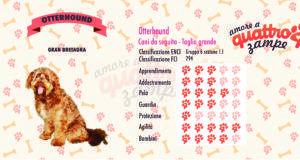 Otterhound scheda razza