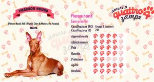 Pharaon hound scheda razza