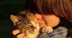 abbracciare gatto