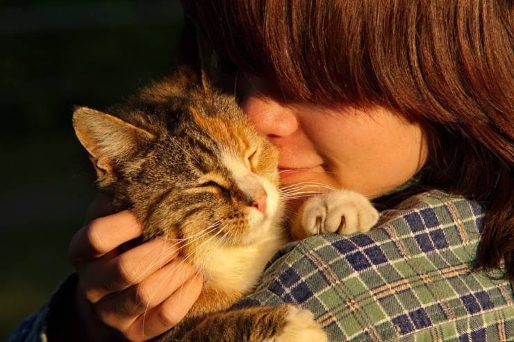 massaggi carezze gatto