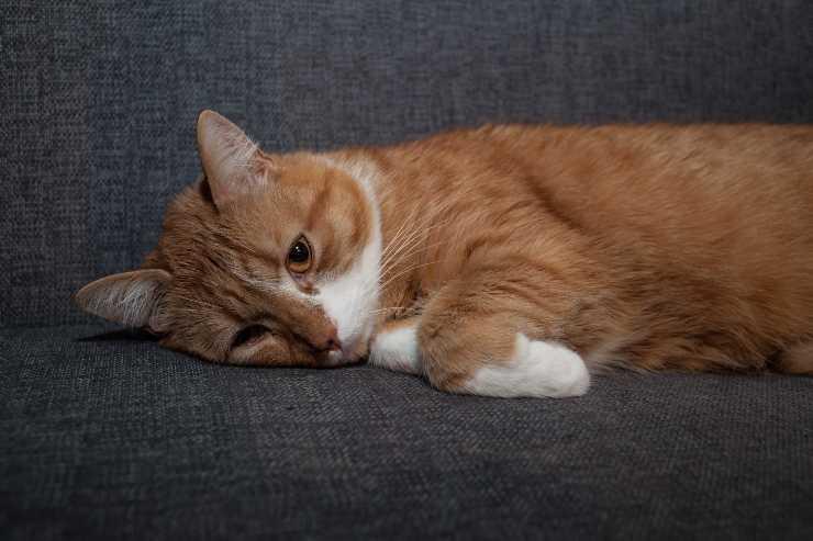 si può lavare il gatto se è malato