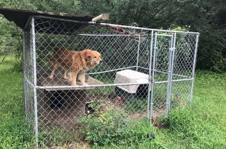 Mingo il cane liberato dopo 8 anni