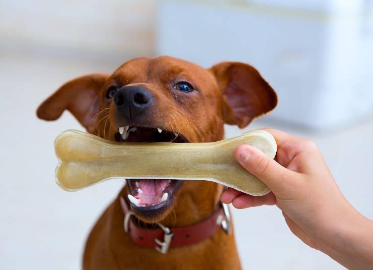 osso per cane fatto in casa
