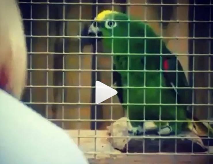 pappagallo canta canzone beyoncé