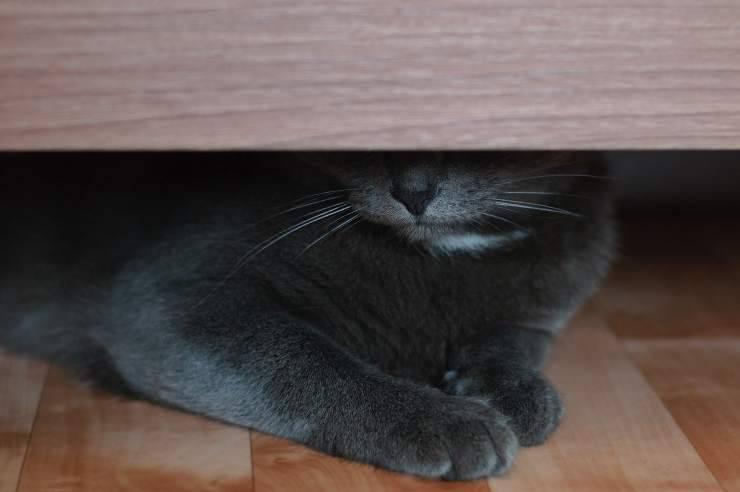 Perché il gatto si nasconde sotto il letto