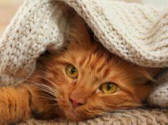 Perché il gatto si nasconde sotto le coperte